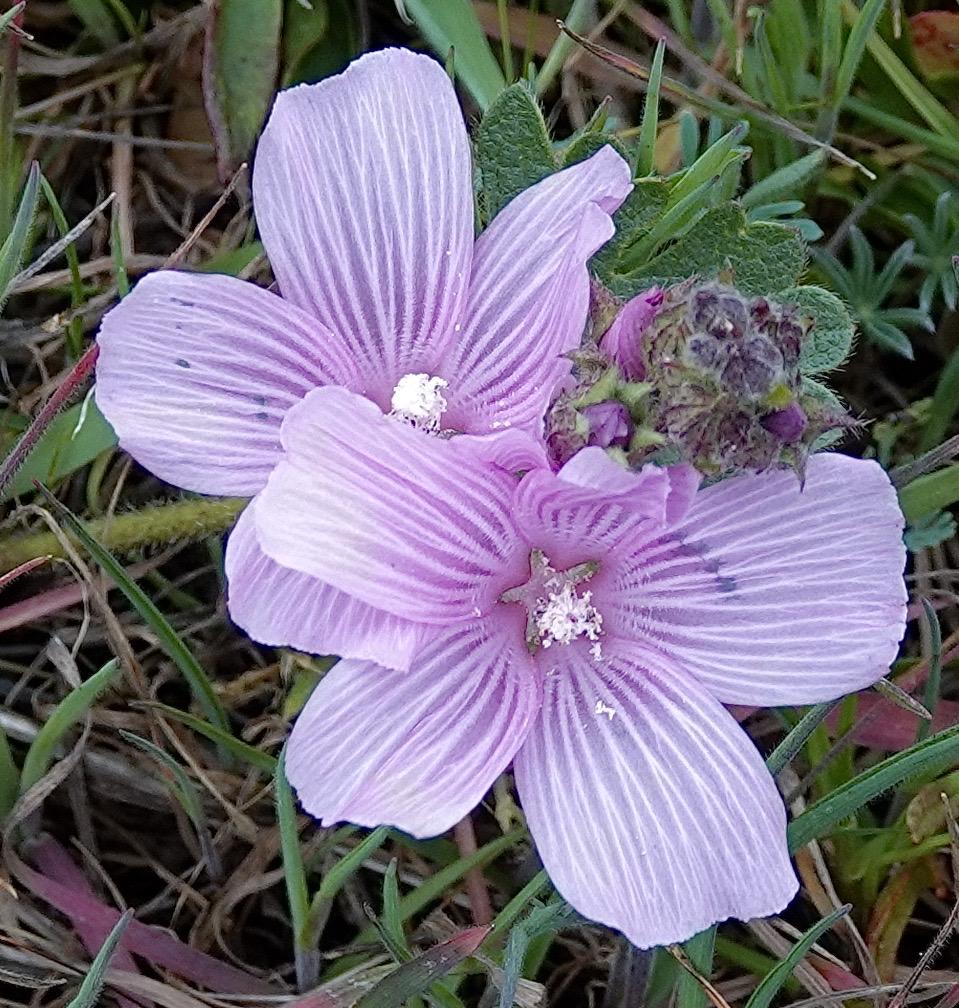 Checker Bloom